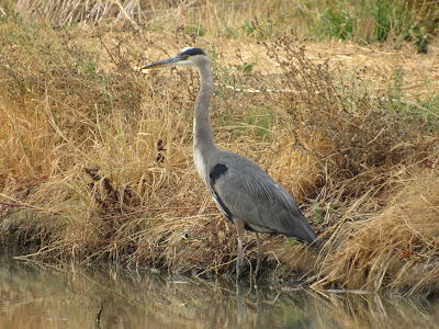 Colusa National Wildlife Refuge California birding