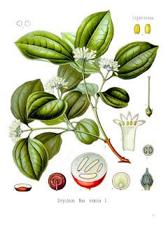 Kulczyba wronie oko opis działanie zioła