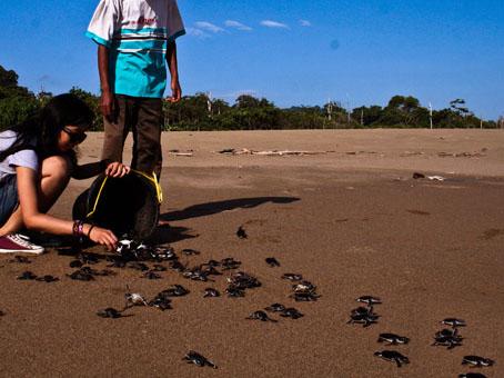 Pantai Sukamade, Pantai Indah Juga Rumah Bagi Para Penyu