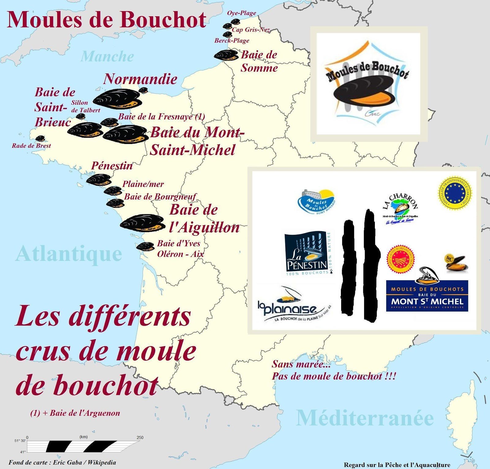 moule de bouchot : recettes du succès des moules marinières