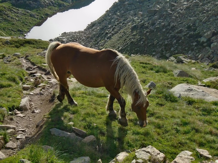 Un caballo en Els Pessons