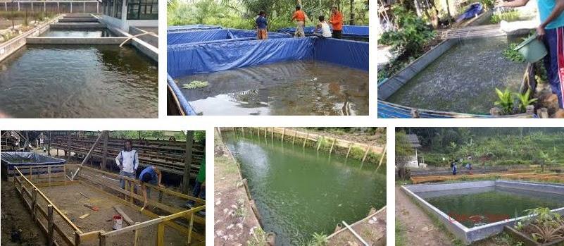 Jenis Kolam untuk Ternak Lele Sekaligus Menjadi Hiasan Taman