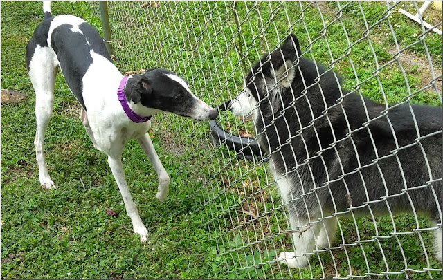 Cheyenne meets next-door neighbor Dakota
