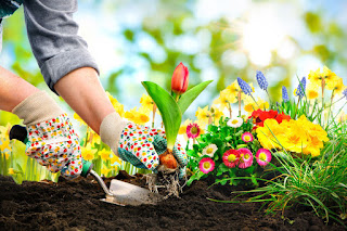 Two hands in brightly-patterned gloves using a trowel to plant a red and yellow flower in the dirt