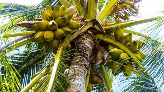 Pengertian Tumbuhan Monokotil, Ciri dan Contohnya