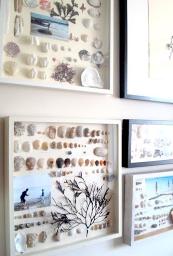 beach shell memory boxes
