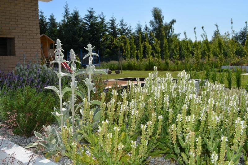 Hierbas perennes de bajo mantenimiento