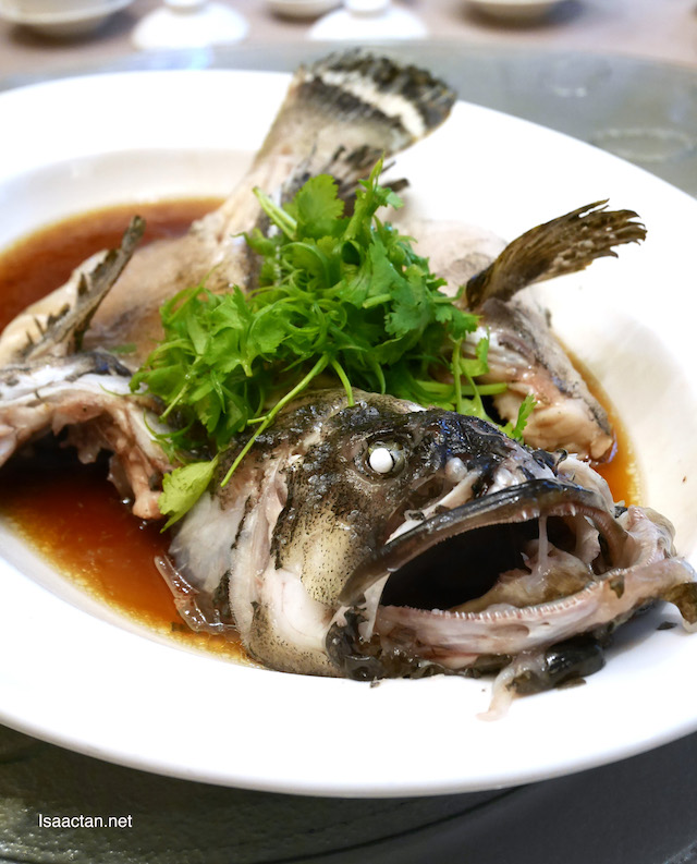 Steamed Dragon Garoupa with Superior Soy Sauce Hong Kong Style
