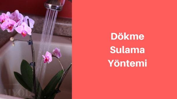 dökme sulama ile orkide sulama