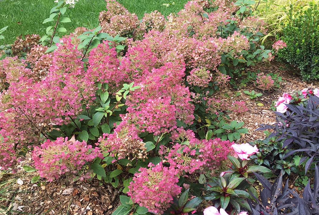 The Best Plants In The Early Fall Garden The Impatient Gardener