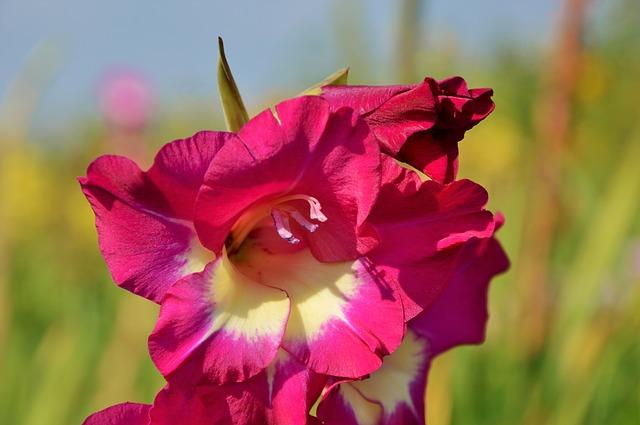 hoa dơn đẹp nhất 6
