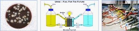 listrik dari urine