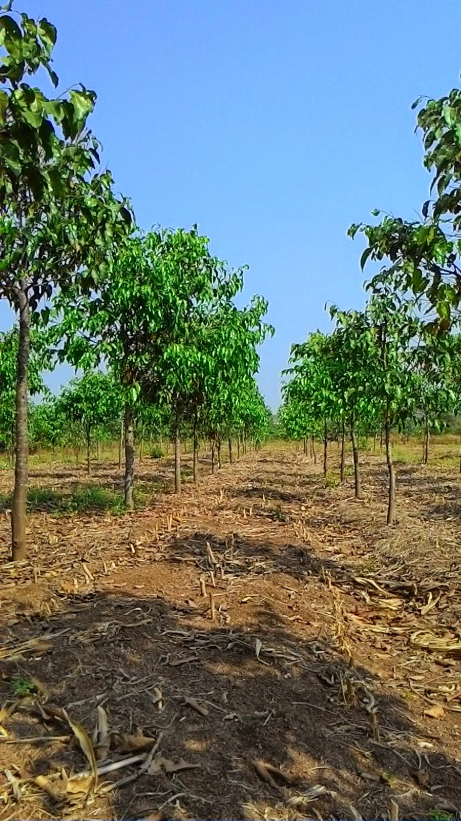 Vườn sao 3.5 ha đang phát triển