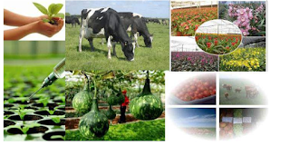 Agricultural Courses Offered in Nigerian Universities | UTME & DE.