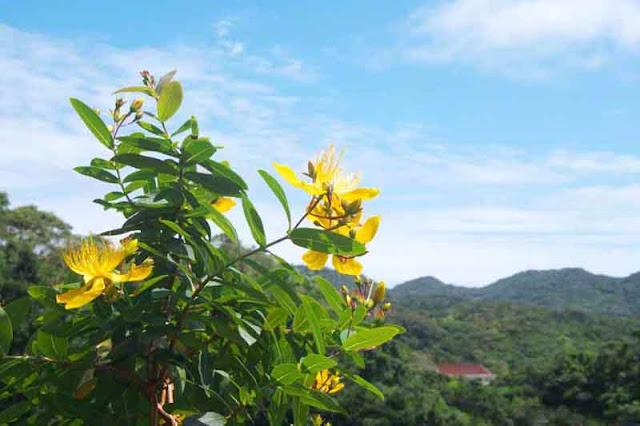 flowers, gardens, hills, Okinawa