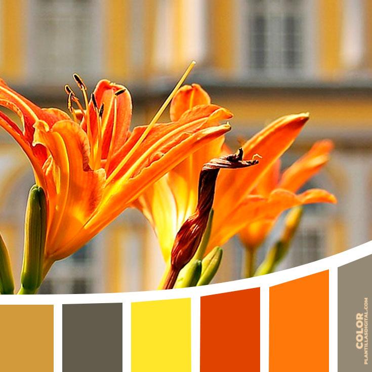 color_425