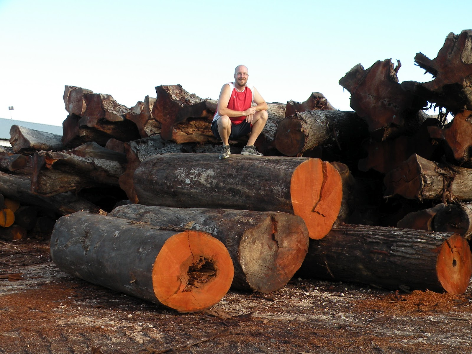 How to Start a Low-Impact Logging Company