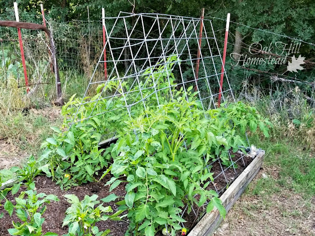 How to make an easy garden trellis.
