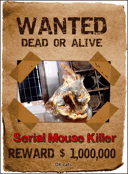 Photoshopped Cat picture • Cat photo manipulation • Serial mouse killer • Wanted Dead or Alive • REWARD $1,000,000