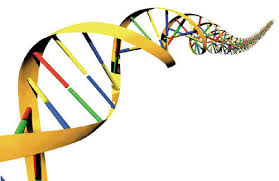 Proses Pengakuan DNA Sebagai Materi Genetik