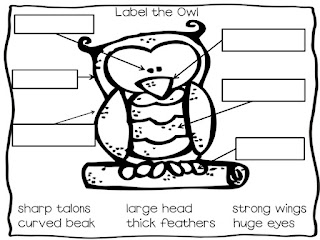 A Food Chain Diagram, A, Free Engine Image For User Manual