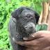 Hewan Bermata Satu Lahir di India dan Indonesia