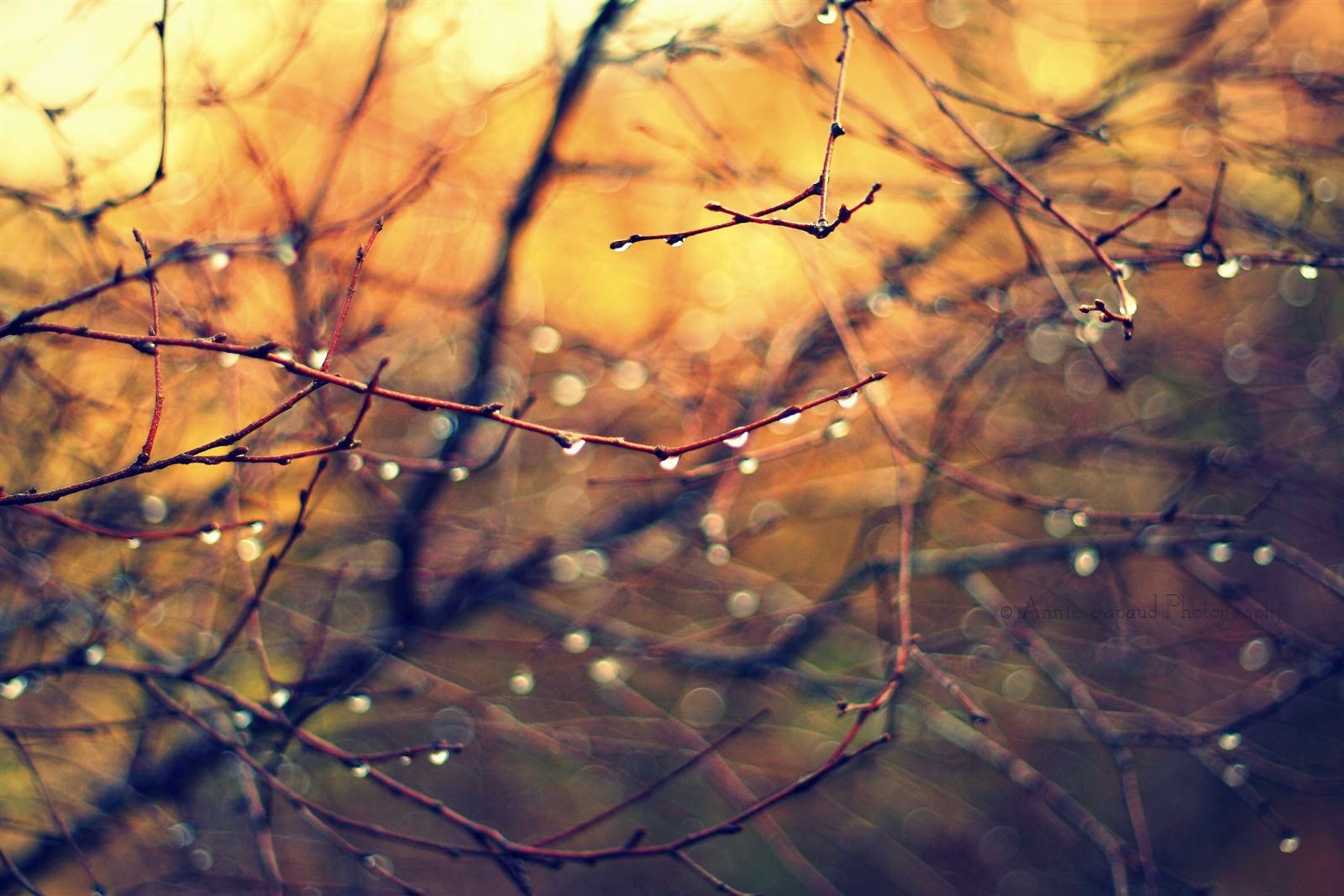 raindrops on branches with golden light