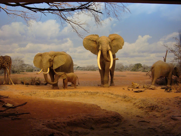 Museums Los Angeles Natural History African Mammals