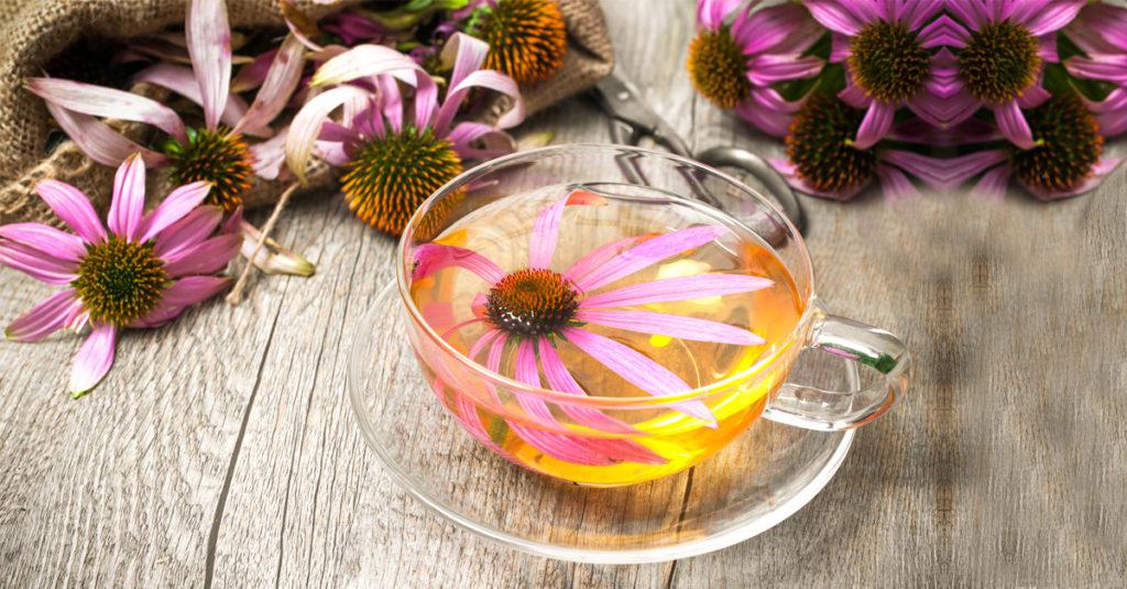Benefícios do chá de equinácea e como usá-lo para uma grande saúde