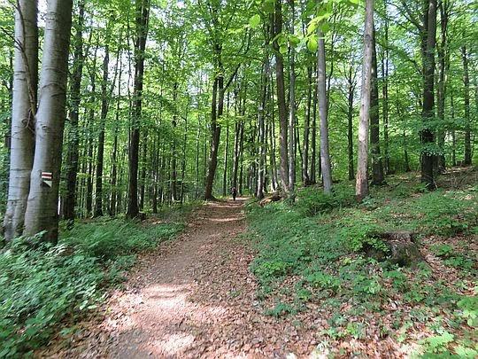 Leśna droga na szczyt Rotundy.
