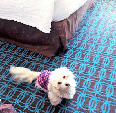 Our pet friendly hotel room at Fairfield Inn and Suites in Plymouth, NH, near Waterville Valley.
