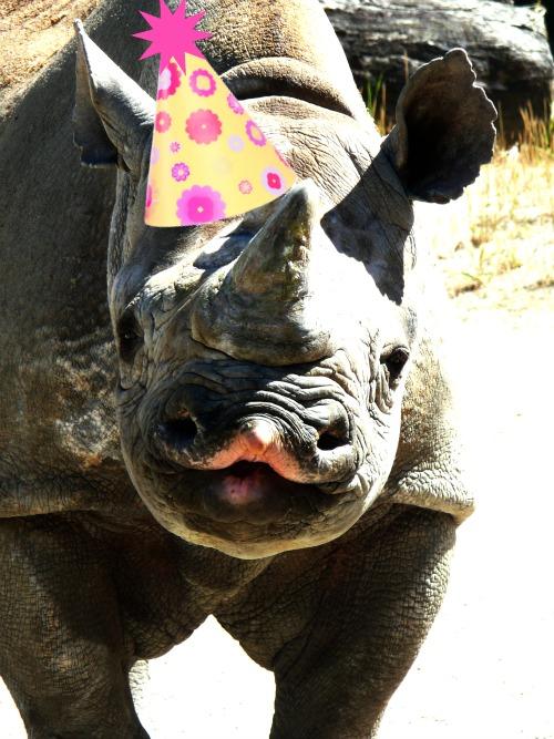 I Am NOT An Anteater Happy Birthday Elly Black Rhino Birthday