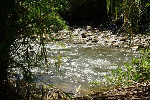 נהר הירדן ביום