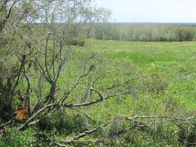habitat del ciervo de los pantanos