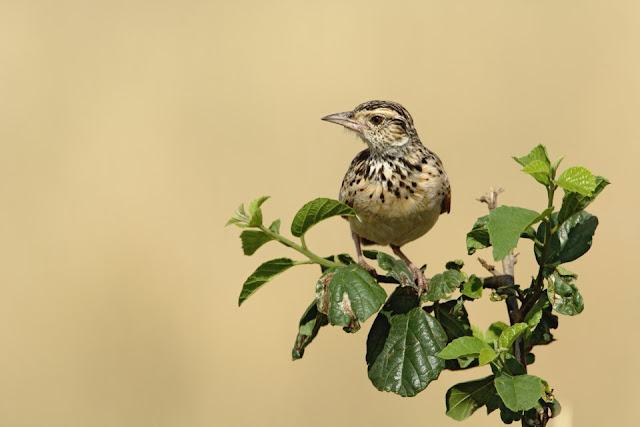 «Мы теряем птиц и насекомых». К чему приведет вымирание животных?