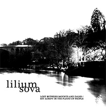 Lilium Sova