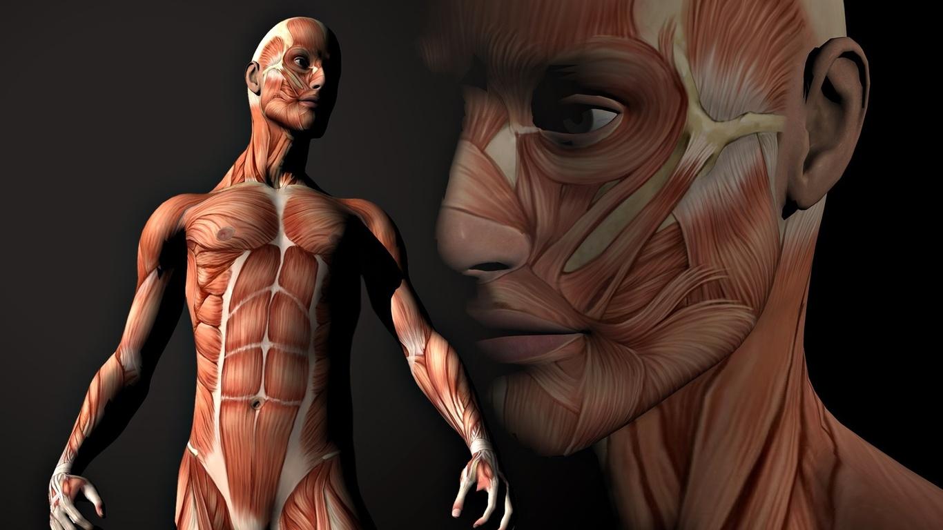 Test: ¿Cuánto sabes sobre anatomía? | Ortografía y literatura