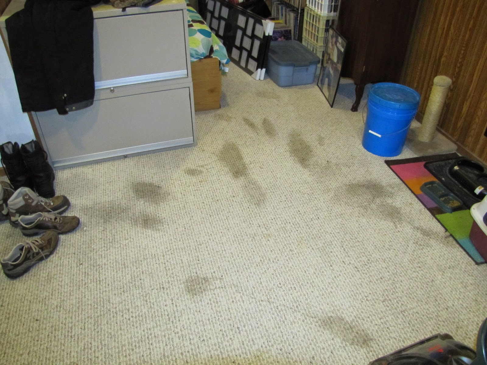 Best Pet Stain Remover, Carpet Cleaning Solution And Green ...