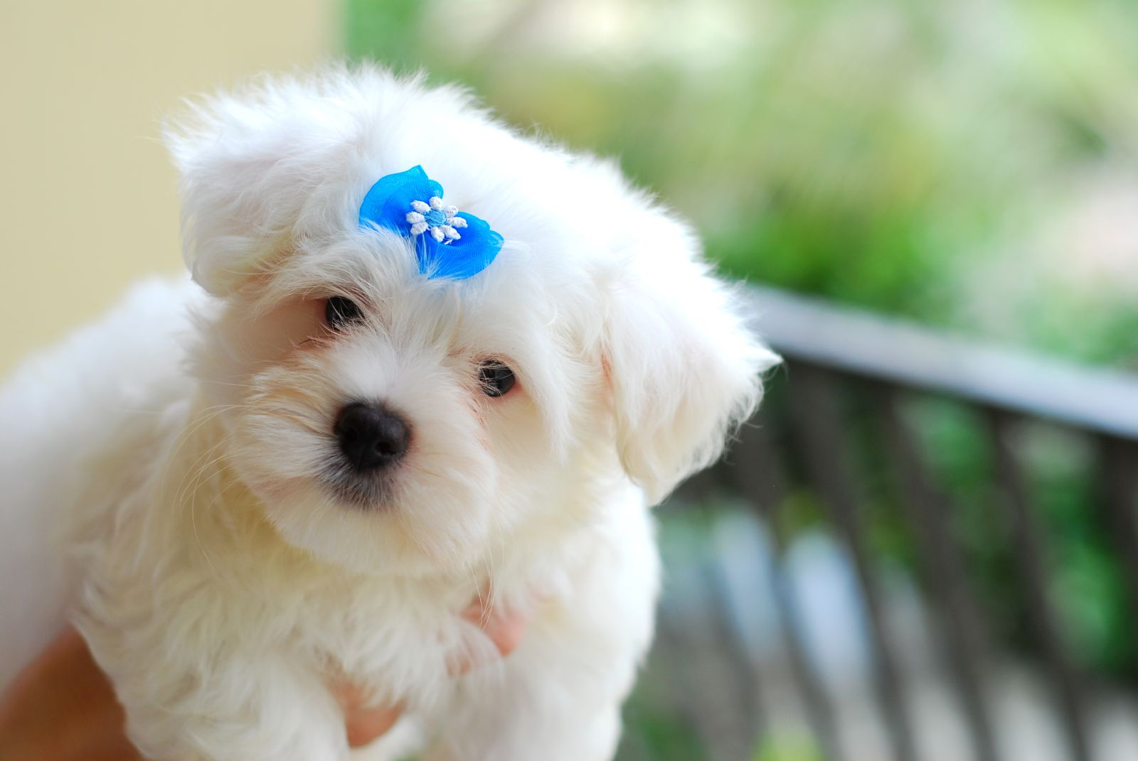 Most Popular Small Dog Breeds In Us