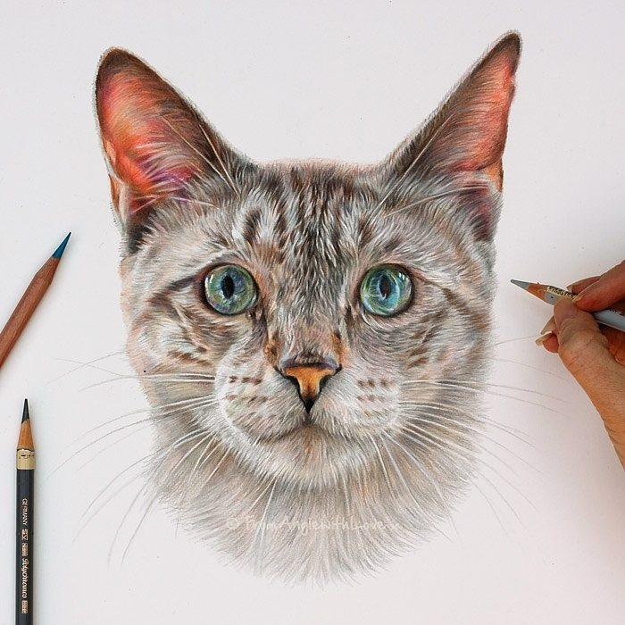 06-Monty-Lynx-point-Siamese-Cat-Angie-A-Pet-and-Wildlife-Pencil-Drawing-Artist-www-designstack-co