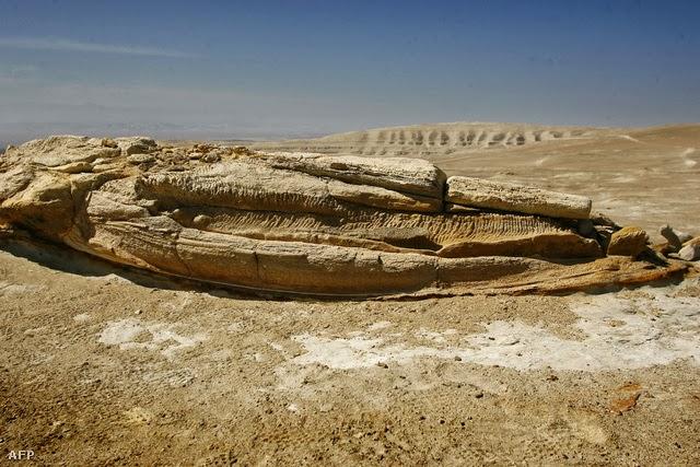 Megfejtették a sivatagi bálnák rejtélyét