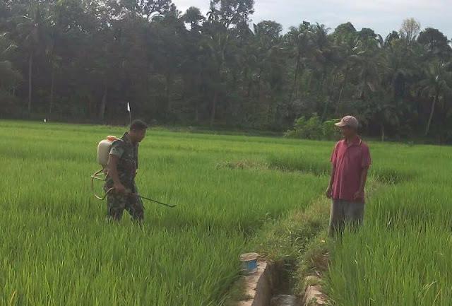 Tentara ini Semangat Bantu Petani Lakukan Penyemprotan di Desa Besadi