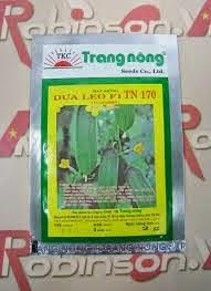 Một giống dưa leo của công ty Trang Nông hay được gieo trồng