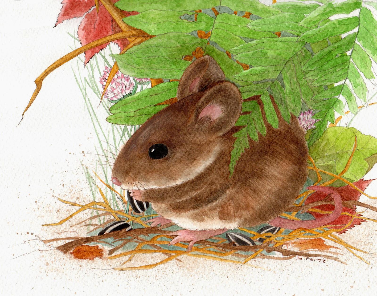 field mouse_susan perez