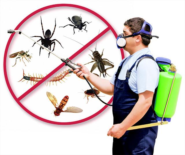 افضل شركة رش مبيدات بالقصيم