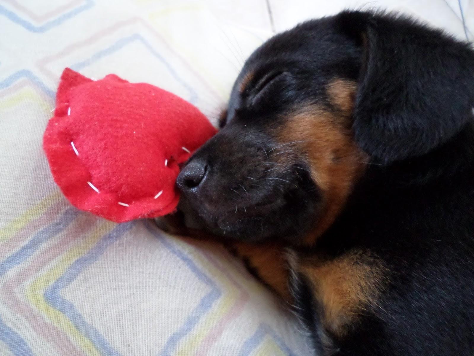 cachorrinho fofo dormindo