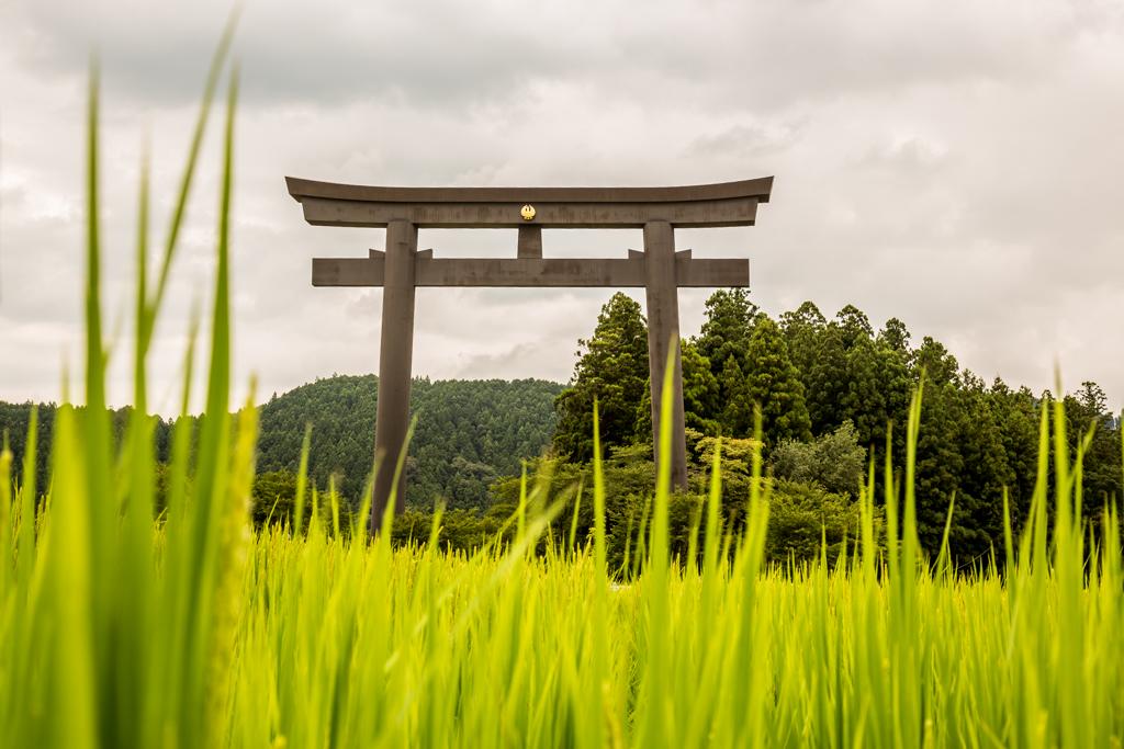 28. Oyunohara Torii
