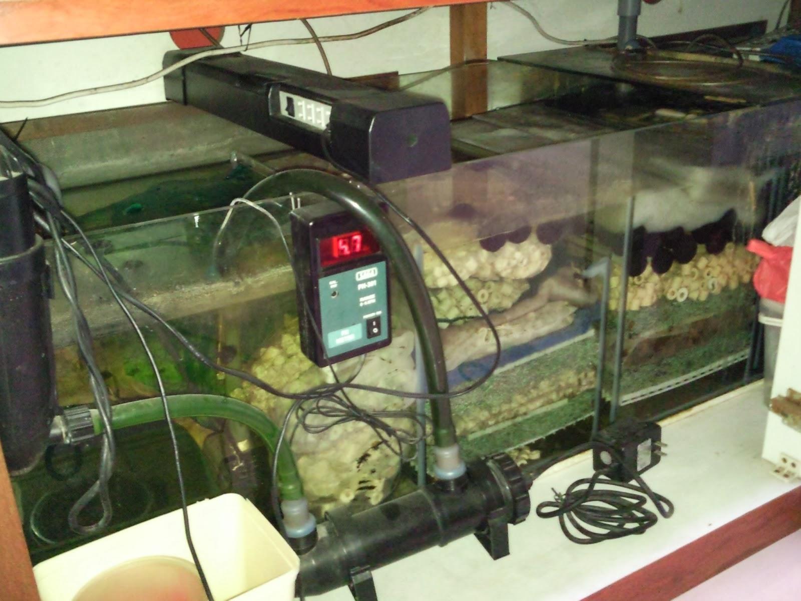 Fisher Man Fish Tanks And Aquarium CRS: 6 Feet Fish Tank for Sale