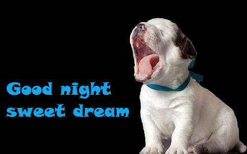 Good Night Sweet Dreams, Funny Dog Wallpaper