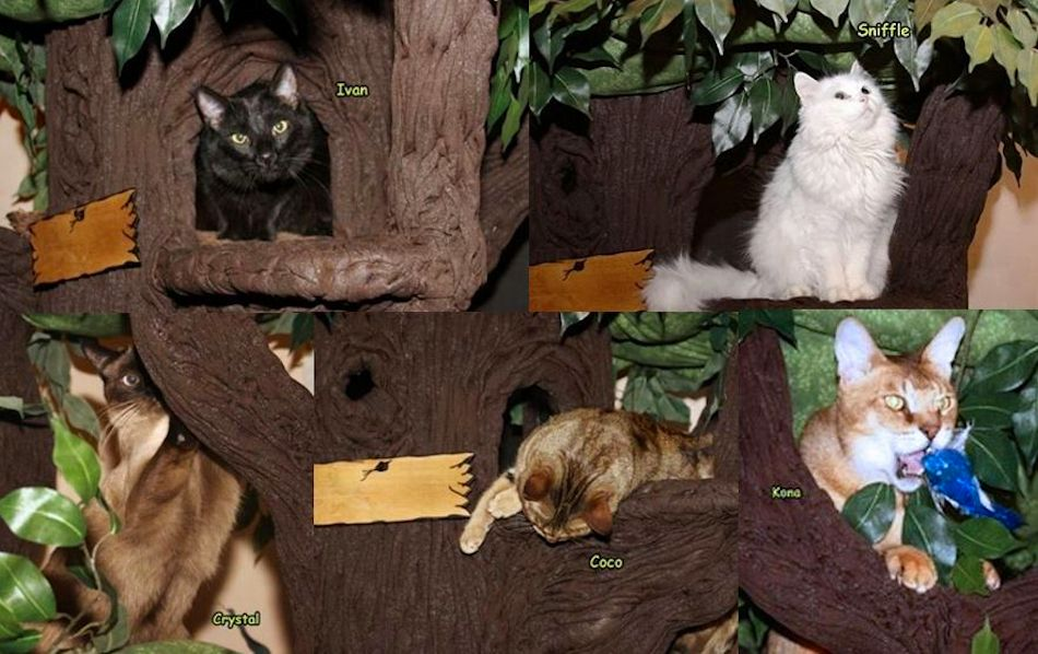Sturdy Cat Trees from A Fantasy Forest